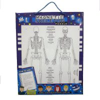 Skeleton-magnetic-chart600